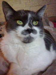Bibou, chat Gouttière