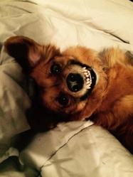 Biboun, chien
