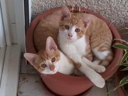 Bichette, chat Gouttière