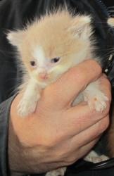 Bicksy, chat Gouttière