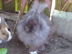 Bicky, rongeur Lapin