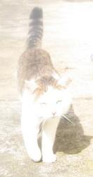 Bidou, chat