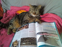 Bidouille, chat