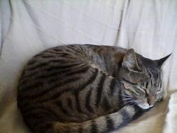Muche, chat Gouttière