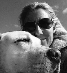 Bigee, chien Labrador Retriever