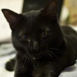 Bijou, chat