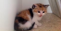 Mandarine, chat Gouttière