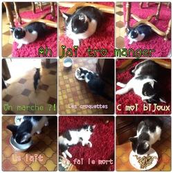 Bijoux, chat