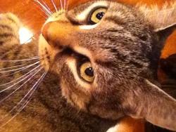 Bil, chat Gouttière