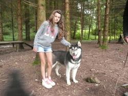 Bill, chien Husky sibérien