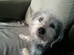 Billie, chien
