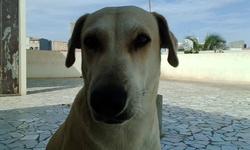 Billy, chien