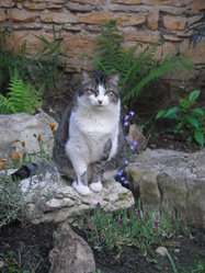 Billy, chat Gouttière