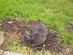 Bilou, chat Gouttière