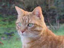 Bing, chat Gouttière