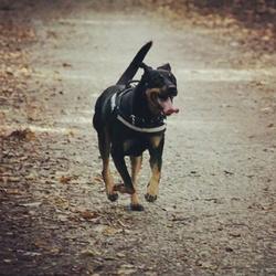 Binky, chien