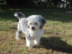 Biscotte, chien