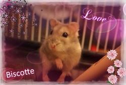 Biscotte Au Paradis, rongeur Hamster