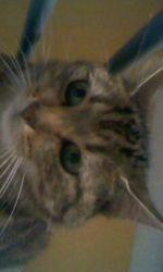 Biscotte Ou Cocotte Selon Les Jours, chat
