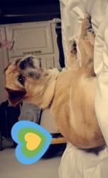 Biscuit, chien