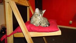 Biscuit, chat Gouttière