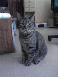 Bisig, chat Gouttière