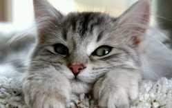 Bisous, chat Gouttière