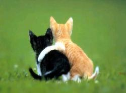 Black Et Ceyu, chat