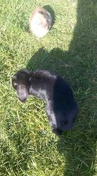 Blacky, rongeur Lapin