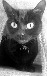 Blacky, chat