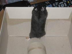 Blacky, rongeur Hamster