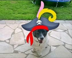 Blacky, chien