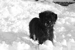 Blake, chien