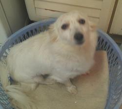 Blanche, chien