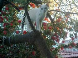 Blanche, chat Gouttière
