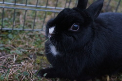 Blanche, rongeur Lapin