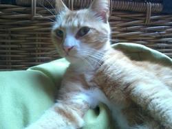 Blanche-Mi, chat Gouttière