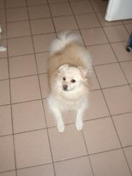 Blancheneige, chien