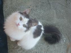 Blanchette, chat