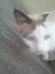 Blancio, chat