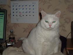 Blanco, chat Gouttière