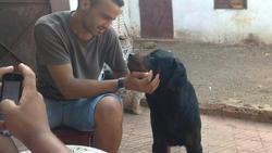 Bleid, chien Rottweiler