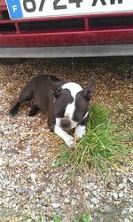 Blitsy, chien