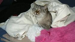Blondin, chat Gouttière