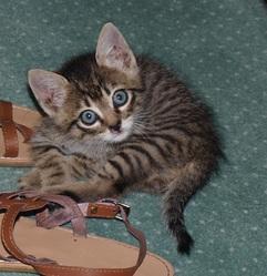Blu, chat Gouttière