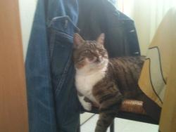 Bob, chat Gouttière
