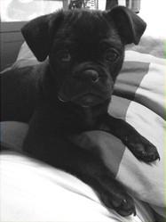 Bob, chien Carlin