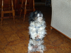 Bobby, chien