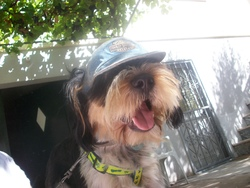 Bobi, chien