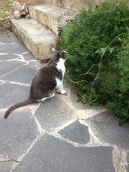 Bobun, chat Gouttière
